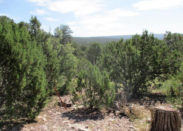 Lots 14&15 Fox Road, Ramah, NM 87321 (MLS #949358) :: Silesha & Company