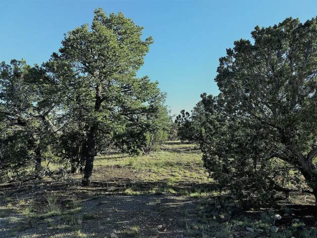 43 Carson Drive, Datil, NM 87821 (MLS #955430) :: The Buchman Group