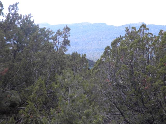 23 Tewa Court, Sandia Park, NM 87047 (MLS #955520) :: The Buchman Group
