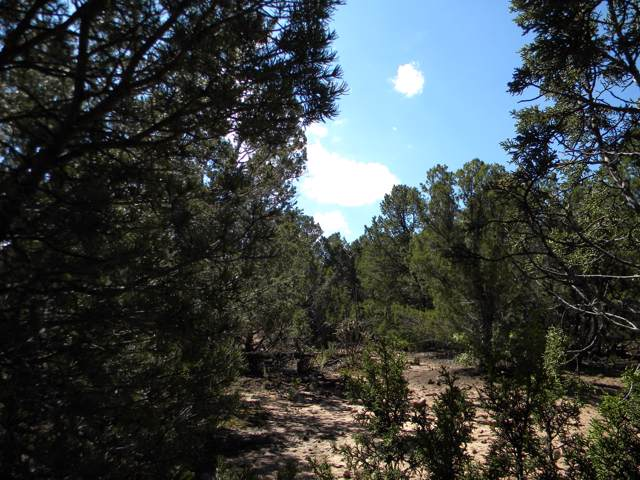 12 Belle Starr Road, Edgewood, NM 87015 (MLS #956416) :: Campbell & Campbell Real Estate Services