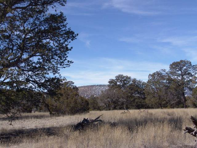 24-I Antelope Hills, Datil, NM 87821 (MLS #957463) :: The Buchman Group