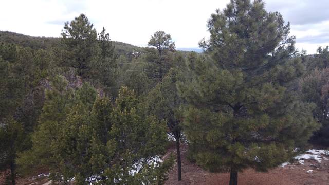 8 Fisher Court, Tijeras, NM 87059 (MLS #958914) :: Campbell & Campbell Real Estate Services