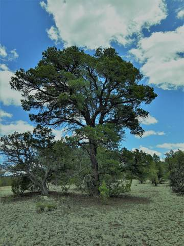 lot 95 Ranch Road, Datil, NM 87821 (MLS #959454) :: The Buchman Group