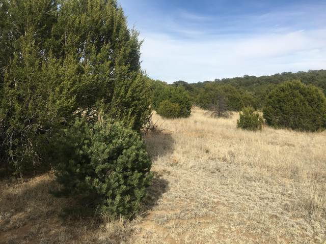 Lost Valley Loop, Cedar Crest, NM 87008 (MLS #965056) :: Campbell & Campbell Real Estate Services