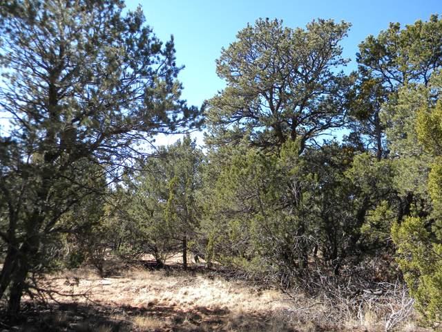 290 Sedillo Hill Road, Tijeras, NM 87059 (MLS #965151) :: Campbell & Campbell Real Estate Services