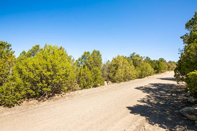 25 Ridge Drive, Cedar Crest, NM 87008 (MLS #965678) :: Campbell & Campbell Real Estate Services