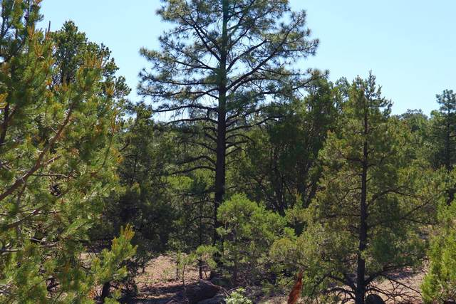 lot 32 Wilderness Circle, Datil, NM 87821 (MLS #970987) :: The Bigelow Team / Red Fox Realty