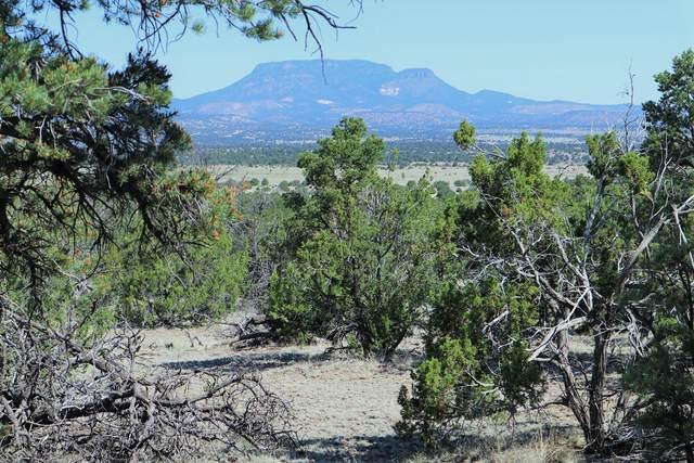 223 Tee Pee Trail, Datil, NM 87821 (MLS #970990) :: The Buchman Group