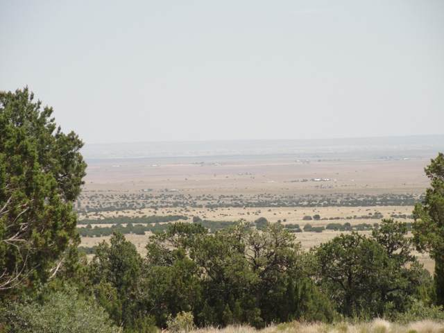 La Questa Road, Torreon, NM 87061 (MLS #971202) :: The Bigelow Team / Red Fox Realty