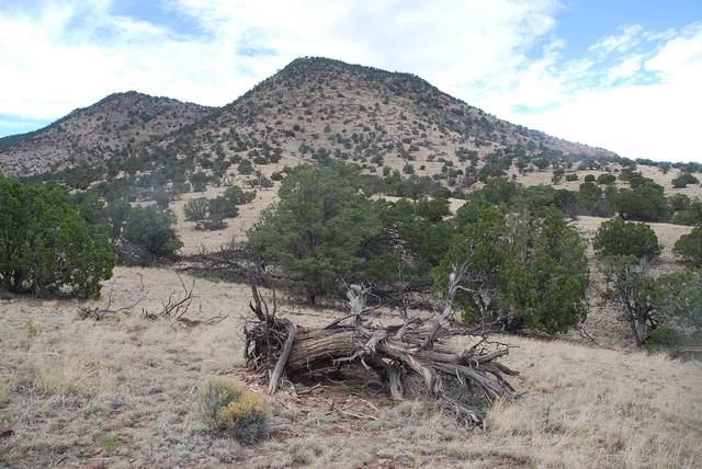Lot 50 Wildwood Highlands, Datil, NM 87821 (MLS #972801) :: Keller Williams Realty