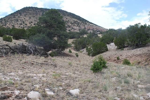 Lot 48 Wildwood Highlands, Datil, NM 87821 (MLS #972804) :: Keller Williams Realty