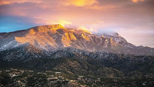 20 Pine Court, Placitas, NM 87043 (MLS #973272) :: Berkshire Hathaway HomeServices Santa Fe Real Estate