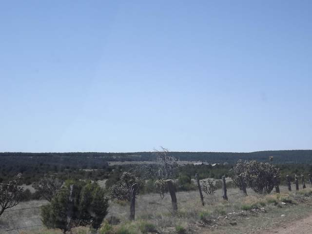 66 B Gallegos Road, Tijeras, NM 87059 (MLS #974392) :: Campbell & Campbell Real Estate Services