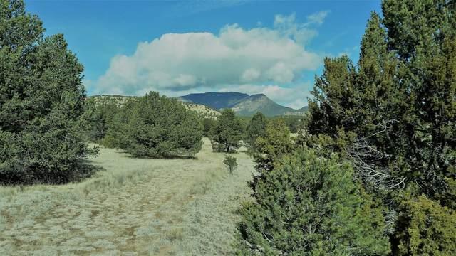 88 Rutter Ranch Road, Datil, NM 87821 (MLS #974512) :: The Bigelow Team / Red Fox Realty
