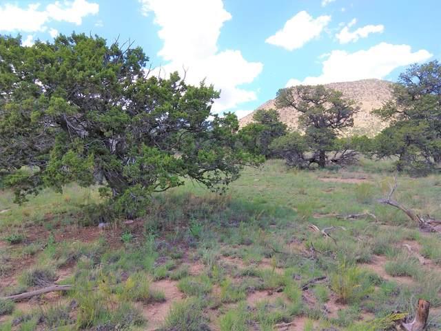 lot 22 Agua Fria Trail, Datil, NM 87821 (MLS #974532) :: Keller Williams Realty