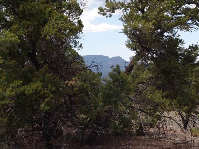 236 Comeback Way Road, Datil, NM 87821 (MLS #974649) :: The Buchman Group
