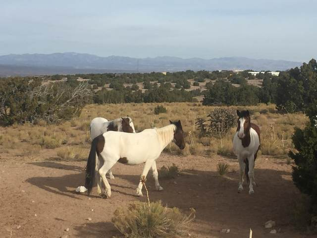 Palomar Road, Placitas, NM 87043 (MLS #975466) :: Berkshire Hathaway HomeServices Santa Fe Real Estate