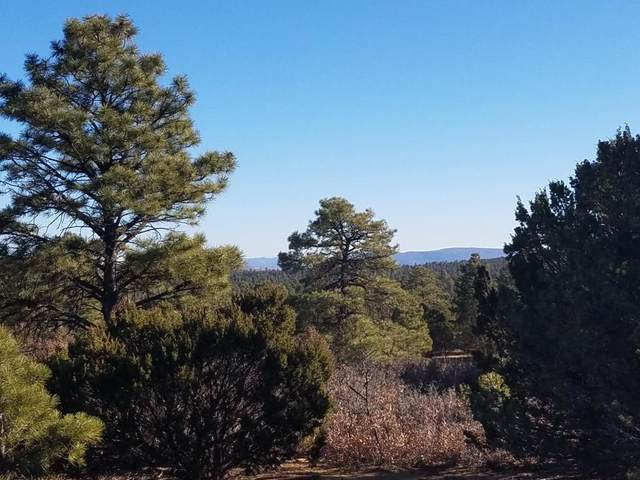 U2 Lot 20 Wild Horse Ranch, Pie Town, NM 87827 (MLS #975558) :: The Bigelow Team / Red Fox Realty