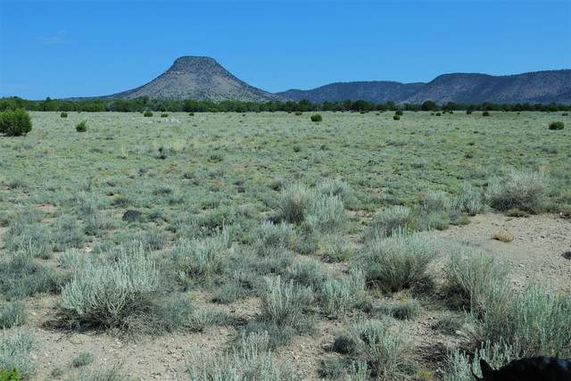 lot 30 Southern Trail, Datil, NM 87821 (MLS #976019) :: The Buchman Group