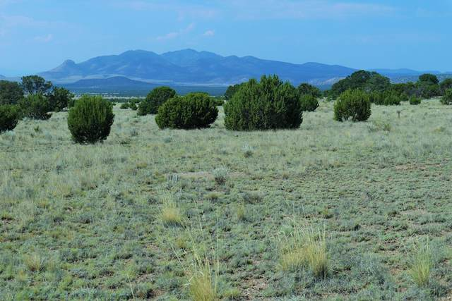 lot 182 Coyote Trail, Datil, NM 87821 (MLS #976021) :: The Buchman Group