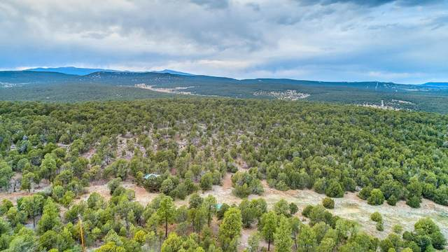6 La Dolce Vita Place, Tijeras, NM 87059 (MLS #977386) :: Sandi Pressley Team