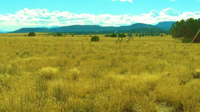 lot 18 Old Thomas IV, Datil, NM 87821 (MLS #977512) :: Keller Williams Realty