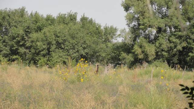 Molina Road Tract A4b, Peralta, NM 87042 (MLS #977548) :: The Buchman Group