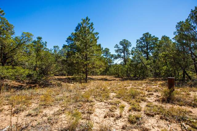 26 Granny Canyon Trail, Tijeras, NM 87059 (MLS #978438) :: Keller Williams Realty