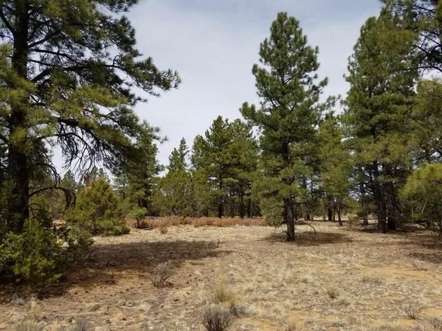 U1 Lot 18 Wild Horse Ranch, Pie Town, NM 87827 (MLS #978852) :: The Buchman Group