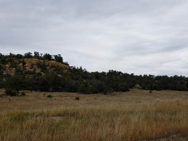U5 Lot 28 Wild Horse Ranch, Pie Town, NM 87827 (MLS #979426) :: The Bigelow Team / Red Fox Realty