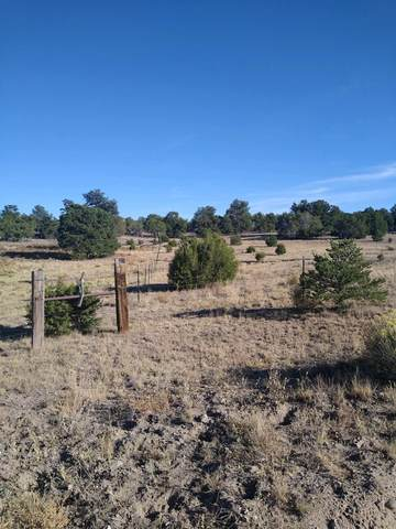 4 Rutter Ranch, Datil, NM 87821 (MLS #981980) :: The Buchman Group