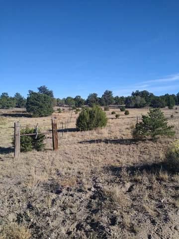 4 Rutter Ranch, Datil, NM 87821 (MLS #981980) :: Keller Williams Realty