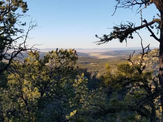 U3 Lot 24 Wild Horse Ranch, Pie Town, NM 87827 (MLS #982130) :: The Buchman Group