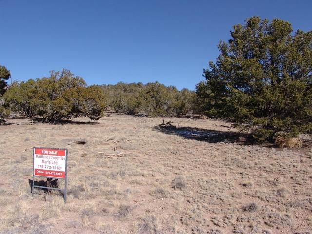 40 Bobcat Trail, Datil, NM 87821 (MLS #982158) :: The Buchman Group