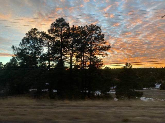 78 Raven Road, Tijeras, NM 87059 (MLS #983264) :: Campbell & Campbell Real Estate Services