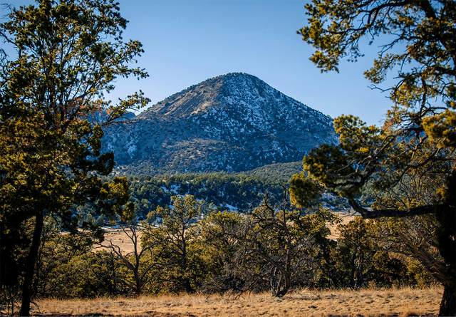 Lot 135 Homestead Subdivision Ii, Datil, NM 87821 (MLS #983554) :: The Buchman Group