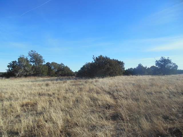 4 Canyon Hills Road, Edgewood, NM 87015 (MLS #983863) :: The Buchman Group