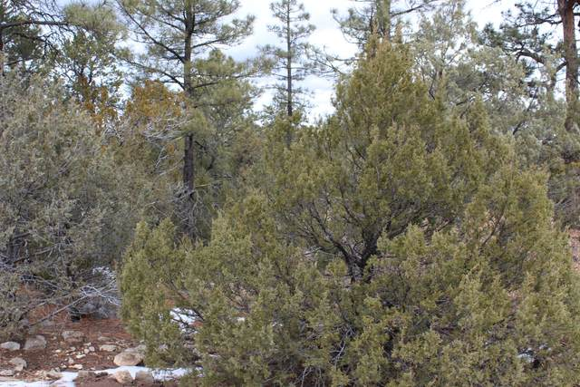 7 Hopi Trail, Edgewood, NM 87015 (MLS #984460) :: Campbell & Campbell Real Estate Services