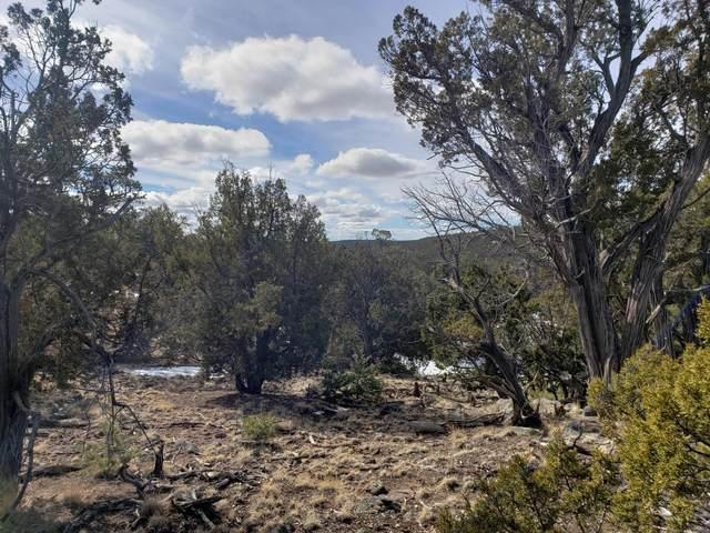 Lot 89 Starfire Drive, Quemado, NM 87829 (MLS #985592) :: The Buchman Group