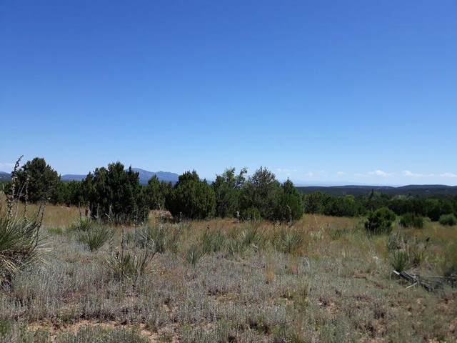 Frost Road, Sandia Park, NM 87047 (MLS #985629) :: The Buchman Group