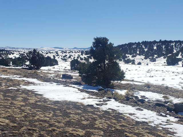 Off Northern Rd, Quemado, NM 87829 (MLS #986378) :: The Buchman Group