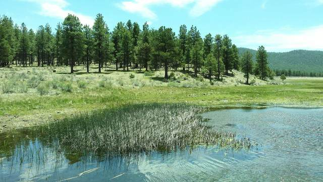1988 Highway 32, Aragon, NM 87820 (MLS #986999) :: Campbell & Campbell Real Estate Services