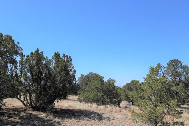 50 Raven Road, Datil, NM 87821 (MLS #987474) :: Keller Williams Realty