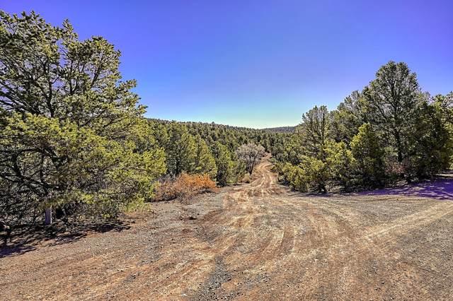 15 Juniper Ridge Road, Tijeras, NM 87059 (MLS #987732) :: The Buchman Group