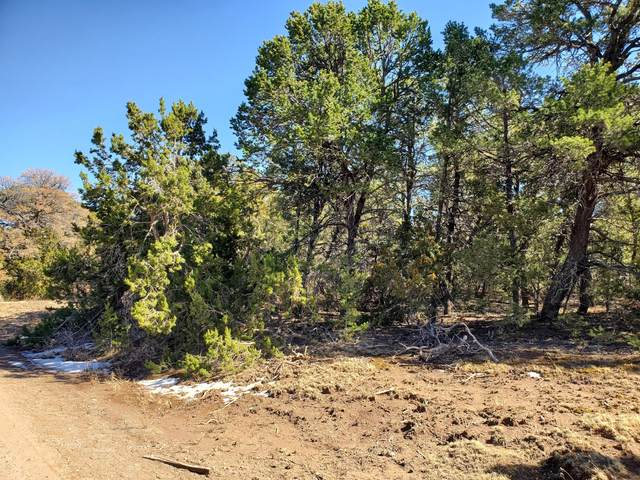 2 Camino Oro Drive, Tijeras, NM 87059 (MLS #988132) :: The Buchman Group