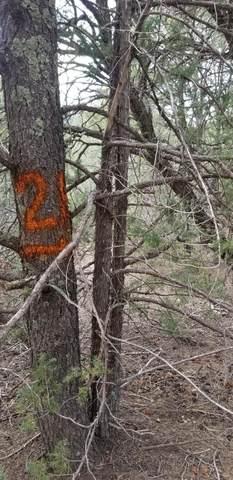 21 Cedar Hill Drive, Cedar Crest, NM 87008 (MLS #989849) :: Sandi Pressley Team