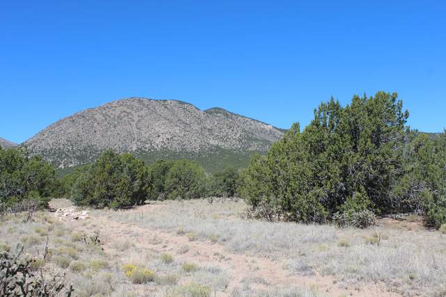 19 Camino Monte Azul, Edgewood, NM 87015 (MLS #989940) :: Sandi Pressley Team