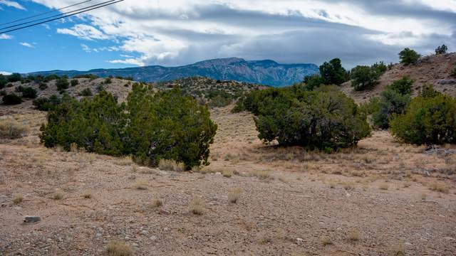 Chaparral Road, Placitas, NM 87043 (MLS #989983) :: The Buchman Group