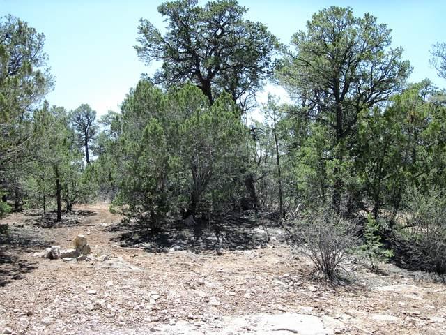 217 Five Hills Drive, Tijeras, NM 87059 (MLS #990081) :: The Buchman Group