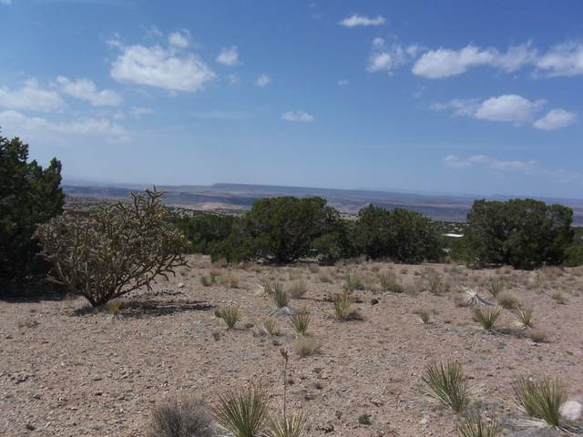 Palomar Road - Lot 17, Placitas, NM 87043 (MLS #990153) :: The Buchman Group